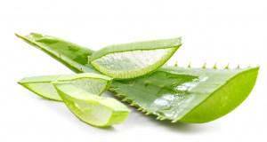 cut aloe leaves on white background
